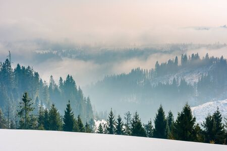 majestic countryside at sunrise in wintertime. spruce trees on snow covered slopes. clouds and fog rise above distant rolling hills. beautiful rural landscape in mountainous area of carpathians