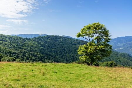 tree on the meadow in mountain scenery. beautiful summer landscape on a sunny day. wonderful weather at high noon with clouds on the blue sky Stock Photo