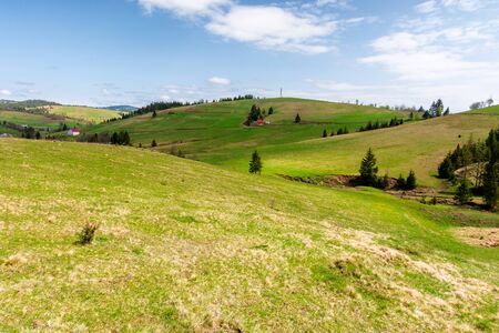 rolling hills of carpathian countryside in spring. beautiful rural landscape of ukraine. green grassy meadows and fluffy clouds on the blue sky