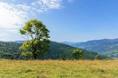 tree on the meadow in mountain scenery. beautiful summer landscape on a sunny day. wonderful weather at high noon with clouds on the blue sky Stock Photo - 138244378