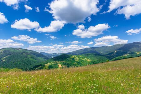 mountain meadow with wild herbs and green grass. wonderful summer scenery at high noon. forested hills roll off in to the distant ridge. sunny weather with beautiful cloudscape on the blue sky