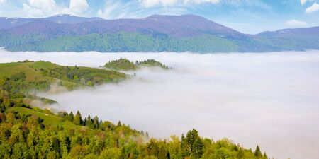 mountainous countryside in the morning. valley full of rising fog. green foliage on trees. wonderful nature scenery in springtime