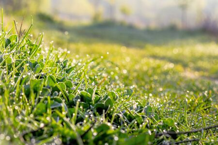 green grass in morning dew. beautiful springtime nature scenery in the morning Stock Photo - 138617833