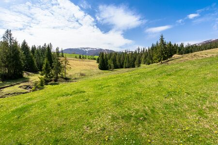 meadow and forest in mountains on a sunny day. snow capped ridge in the distance. wonderful springtime weather with clouds on the sky. traditional countryside landscape of carpathians Stock Photo