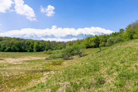 idyllic springtime landscape composite. meadow among the forest. high tatra mountain ridge with snow capped peaks in the  distance. sunny weather with clouds on the sky. beauty of nature concept Stock Photo - 139182307