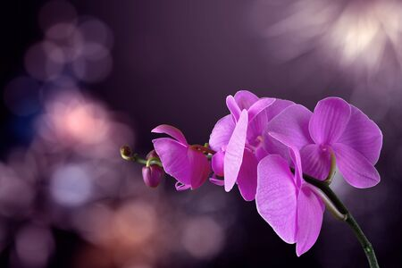 orchid flower on a blurred purple background. valentine greeting card. love and passion concept. beautiful romantic floral composition.