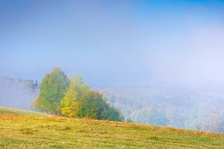 foggy mountain scenery in autumn. clouds rising above the rolling hills on a sunny morning. wonderful landscape with trees in fall foliage and grassy meadows. spectacular weather
