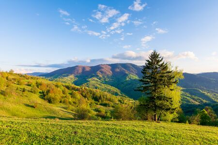 wonderful rural landscape in mountains at sunset. trees on the meadow in green grass in evening light. fluffy clouds on the blue sky. wonderful springtime scenery in evening light Stock Photo - 139859032