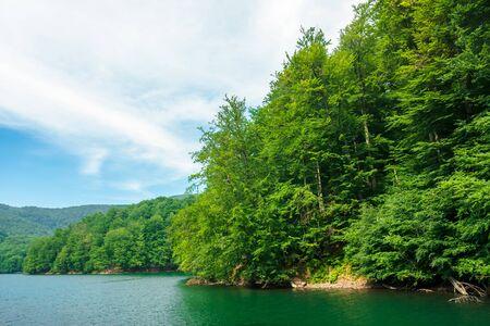 beautiful vihorlat lake among the forest in summer. fantastic slovakian mountain scenery