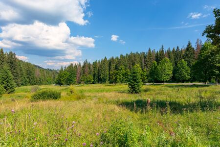 forested hill of carpathian mountains. clouds on the blue sky. ridge in the distance. sunny afternoon weather in summer.