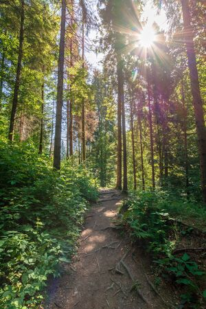 forest trail on the hillside. beautiful nature scenery with beech trees on a sunny day. bright sun through the crown