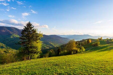 wonderful rural landscape in mountains at sunset. trees on the meadow in green grass in evening light. fluffy clouds on the blue sky. wonderful springtime scenery in evening light Stock Photo - 140208798