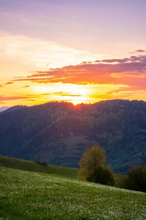 rural landscape in mountains at dusk. amazing view of carpathian countryside with fields and trees on rolling hills. herbs and flowers on the meadow. glowing purple clouds on the sky. calm weather in springtime Stock Photo