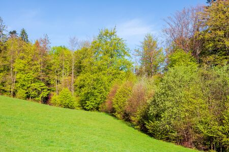 forest on the hill in spring. beautiful nature scenery on a sunny day. meadow in fresh green grass Stock Photo - 140833553