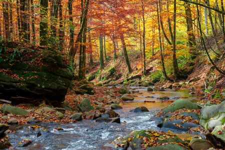 forest river in autumn. rapid water flow among the trees and mossy rocks on a sunny day. foliage in fall colors. beautiful nature scenery