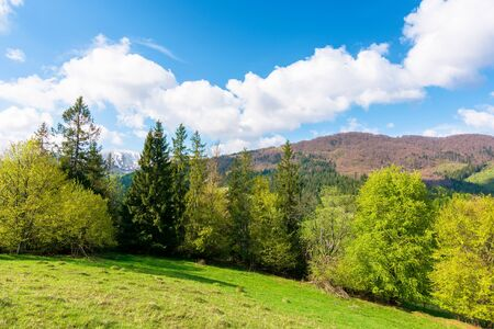 beautiful landscape in springtime. row of trees on the meadow. mountain ridge beneath a blue sky with fluffy clouds in the distance. warm sunny weather Stock Photo - 140833707