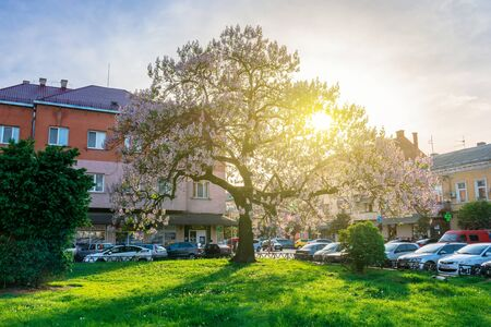 Uzhhorod, ukraine - MAY 01, 2018: Paulownia tomentosa tree in blossom, located on Koriatovycha Square. wonderful cityscape of the old town at sunset in evening light. Stock Photo - 140843021