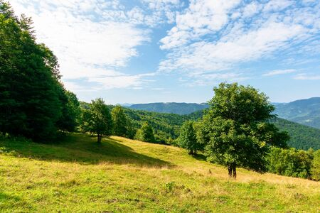 sunny mountain landscape in summer. beautiful scenery with trees on a hillside meadow beneath a blue sky with fluffy clouds. ridge in the distance is clearly visible on a bright day Stock Photo