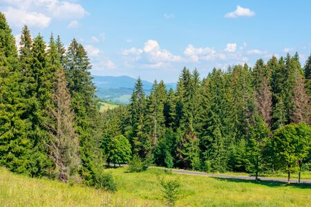 forested hill of carpathian mountains. clouds on the blue sky. ridge in the distance. sunny afternoon weather in summer. Stock Photo - 141829186