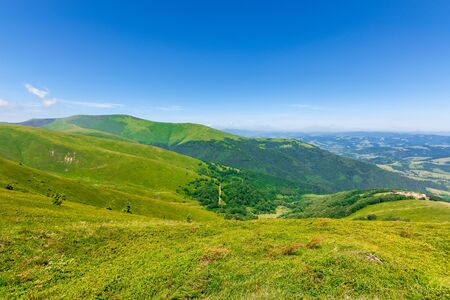 green rolling hills of mountain ridge borzhava. grassy alpine meadows beneath a blue sky with some clouds. beautiful summer landscape of carpathian highlands. velykyy verkh summit in the distance