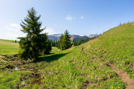 valley of borzhava mountain ridge in springtime. small brook among spruce trees on the green grassy meadow. beautiful rural landscape on a sunny day. snow on the summits