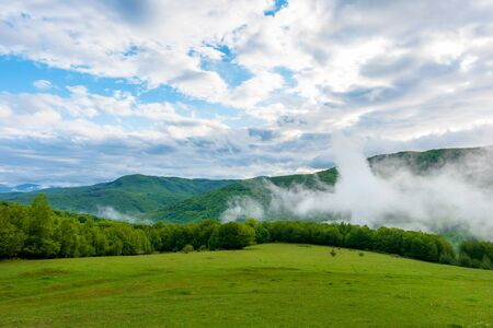 clouds and fog rising above the beech forest. morning mountain scenery of carpathians in spring. green grass on the meadow on the foreground