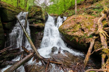waterfall in the forest. two segment stream. fallen trees in the cataract. beautiful nature scenery in springtime. Voievodyn, TransCarpathia, Ukraine Stock Photo