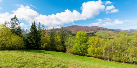 panoramic landscape in springtime. row of trees on the meadow. mountain ridge beneath a blue sky with fluffy clouds in the distance. warm sunny weather Stock Photo - 141640704
