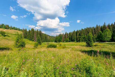 forested hill of carpathian mountains. clouds on the blue sky. ridge in the distance. sunny afternoon weather in summer. Stock Photo - 141642315