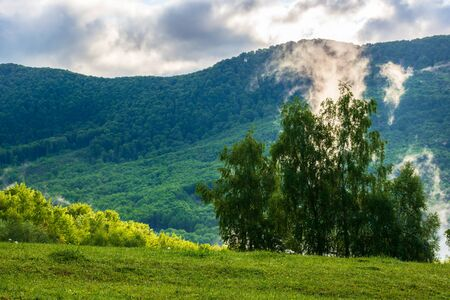 clouds and fog rising above the beech forest. morning mountain scenery of carpathians in spring. green grass on the meadow on the foreground Stock Photo - 141642496