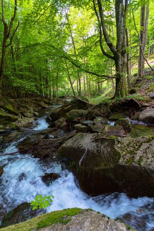 water stream in the beech forest. wonderful nature scenery in spring, trees in fresh green foliage. mossy rocks and boulders on the shore. warm sunny weather