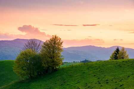 rural landscape in mountains at dusk. amazing view of carpathian countryside with fields and trees on rolling hills. glowing purple clouds on the sky. calm weather in springtime Stock Photo - 141800702