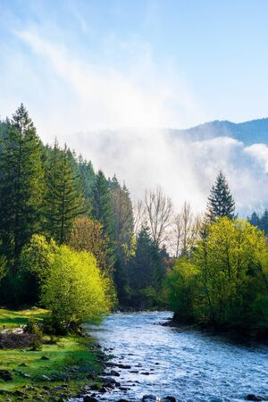 mountain river on a misty sunrise. fantastic nature with fog rolling above the trees in fresh green foliage on the shore in the distance. beautiful countryside scenery in morning light