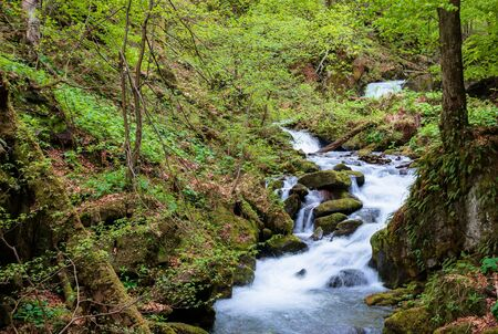rapid water stream in the forest. powerful flow among the mossy rocks. beautiful nature scenery in spring. vivid green foliage on the trees