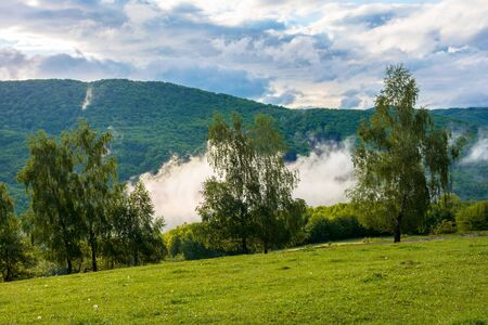 clouds and fog rising above the beech forest. morning mountain scenery of carpathians in spring. green grass on the meadow on the foreground Stock Photo - 141851476