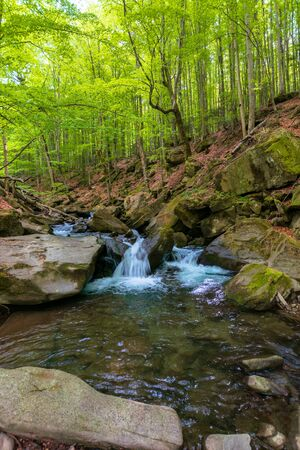 water stream in the beech forest. beautiful nature scenery in spring, trees in fresh green foliage. mossy rocks and boulders on the shore. warm sunny weather