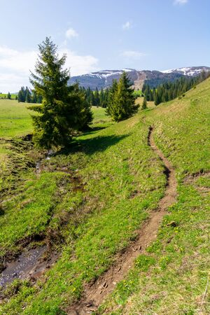 valley of borzhava mountain range in springtime. small brook among spruce trees on the green grassy meadow. beautiful countryside on a bright sunny day. snow on the summits