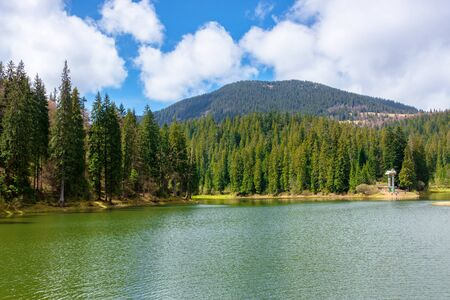 alpine mountain lake among the forest. beautiful sunny weather with fluffy clouds on the blue sky. springtime scenery in dappled light. body of water in Synevyr national park, ukraine
