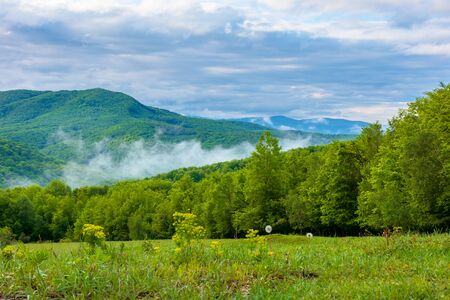 clouds and fog rising above the beech forest. morning mountain scenery of carpathians in spring. green grass on the meadow on the foreground Stock Photo - 142707384