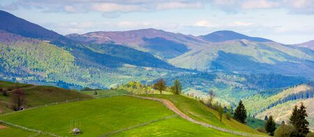 rural landscape in mountains. trees along the path through grassy hill. beautiful nature panorama in spring. wonderful weather with clouds