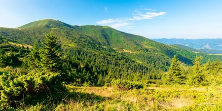 mountain scenery in the morning. coniferous trees on forested hillside with grassy slopes. sunny weather with cloudless sky. chernogora ridge landscape of carpathians in late summer time Stock Photo - 142713217