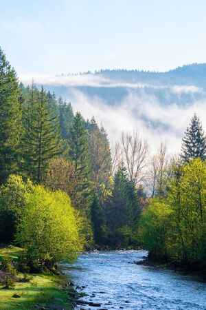 mountain river on a misty sunrise. stunning nature scenery with fog rolling above the trees in fresh green foliage on the shore in the distance. beautiful countryside in morning light Stock Photo