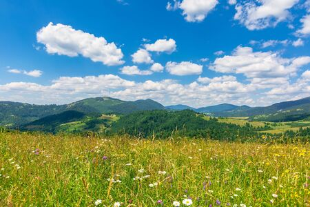 summer scenery of mountainous countryside. alpine hay fields with wild herbs on rolling hills at high noon. forested mountain ridge in the distance beneath a blue sky with fluffy clouds. nature beauty Stock Photo