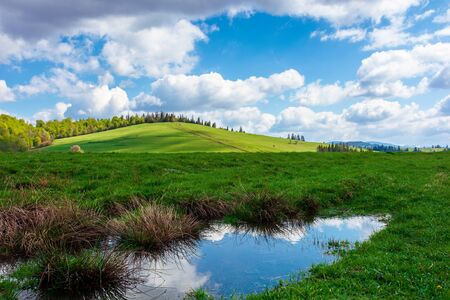 wonderful sunny weather with clouds above the hill. reflecting puddle among green grass on the meadow in dappled ligth, forest in the distance. great nature scenery of carpathian mountains