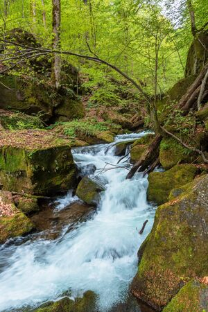 rapid water flow among the forest. trees in fresh green foliage. beautiful nature scenery in spring Stock Photo