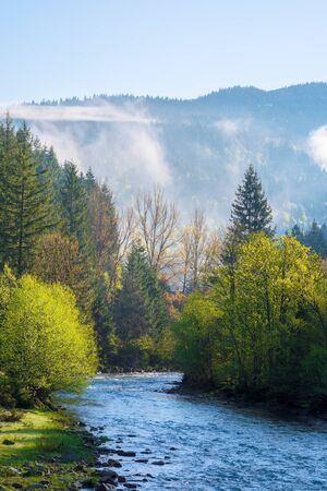 mountain river on a misty sunrise. gorgeous landscape with fog rolling above the trees in fresh green foliage on the shore in the distance. beautiful countryside in morning light Stock Photo