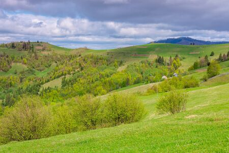 rolling hills and grassy meadows of mountainous countryside. beautiful rural landscape in springtime. sunny weather with clouds on the sky. ridge in the distance