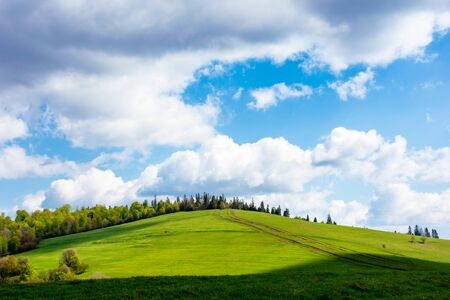 wonderful sunny weather with clouds above the hill. green grass on the meadow in dappled ligth, forest in the distance. great nature scenery of carpathian mountains