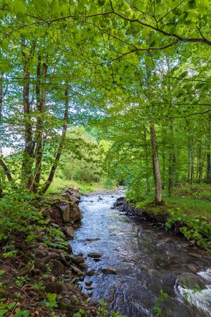 beautiful landscape of rapid mountain river. flow among mossy rocks in the fores in springtime. warm sunny weather. trees in green foliage