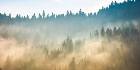 fog above the forest on the hill. mysterious foggy weather in the morning. fantastic mountain scenery Stock Photo